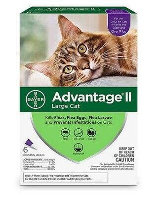 Flea Prevention for Large Cats Over 9 lbs Fleas Tick Treatment Killer 6 Doses