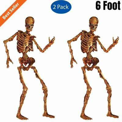 6' Life Size Jointed Skeleton Halloween Party Props Haunted House Skeleton Decor