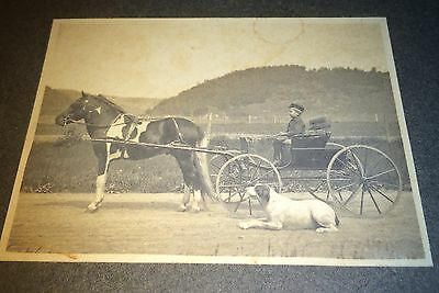 Antique American Outdoor Farm! Boy On Carriage! Horse & Dog! Pet Cabinet Photo!