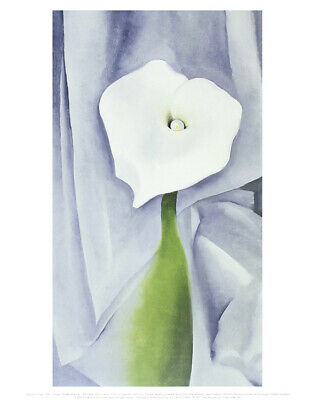 WHITE CALLA LILY FLOWER PHOTO ART PRINT POSTER PICTURE BMP2256A