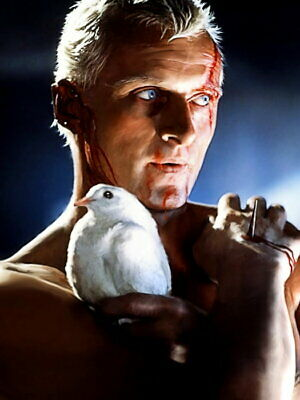 Blade Runner Rutger Hauer Pigeon Sc-Fi Movie Wall Print POSTER AU