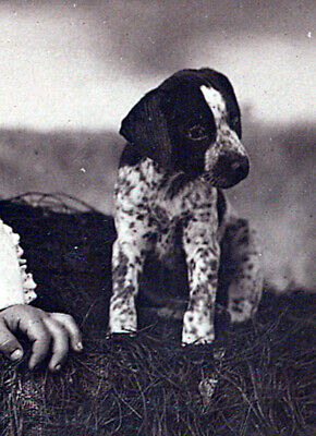 The little puppy from Parsons Kansas pet canine dog