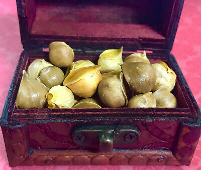 Garlic male bag of 3 units - Ajo Macho - Wicca Spell witchcraft