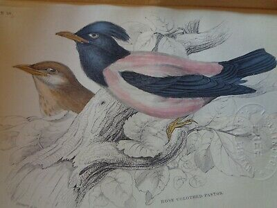 Very Rare Old Book About Birds 1840 Many Hand Coloured Plates