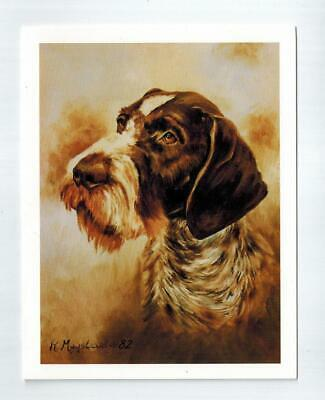 German Wirehaired Pointer Head Notecards 6 Note Cards 6 Envelopes Ruth Maystead