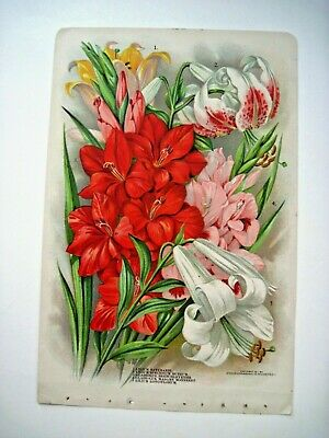 Lovely 1911 Double-sided Book Plate Litho of Lilies,Gladiolu,Narcissu,Tulips *