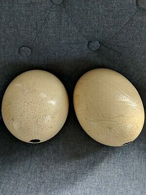 Two Antique Blown Ostrich Eggs Early 20th century Undecorated