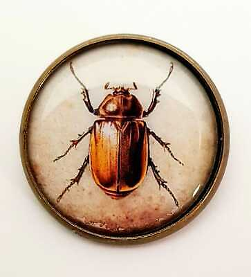 Bettle Brooch Vintage Style Pin/Badge Steampunk Jewellery Insect Bug Nature NEW