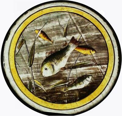 Antique Victorian English Painted Glass Roundel Depicting Fish
