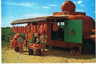 VINTAGE 1970s 'SELLING ORANGES ROADSIDE-RIVERLAND' SA REAL PHOTO POSTCARD