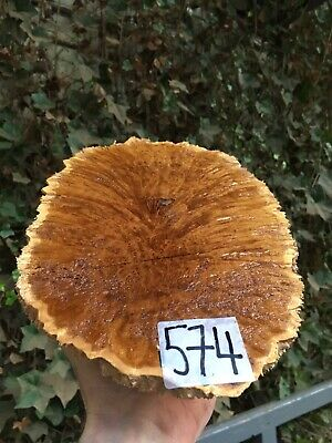 Brown Mallee Burl Woodturning Blanks/burrs/exotic Woods NEW STOCK JUST IN !!