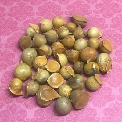 Garlic male bag of 50 units - Ajo Macho - Wicca Spell witchcraft