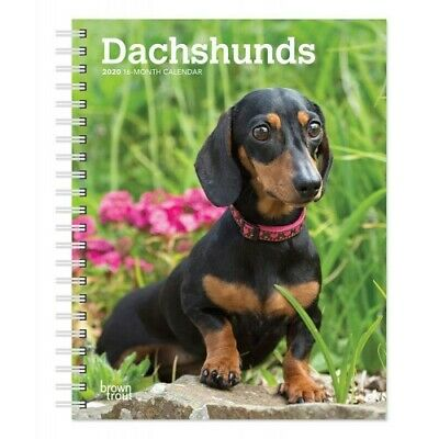Personalised Photo 2020 A5 Week Per View Diary also DOG SHOW DATES//APPOINTMENT