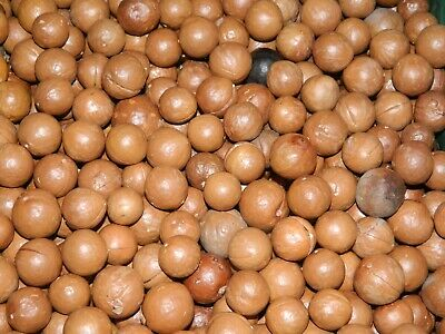 Macadamia Nuts In Shell (1,2 or 3kgs) $13 for 1 kg, $25 for 2 kgs and $36 for 3k