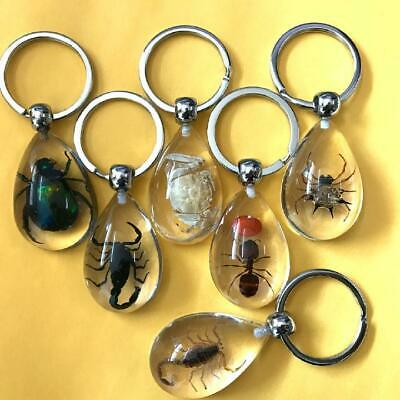 16 Pcs New Real Drop Mix Ant Scorpion Spider Crab Beetle Insect Lucite Keych…