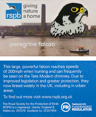 RSPB Pin Badge | peregrine falcon Tate DWN 2017 (01317)