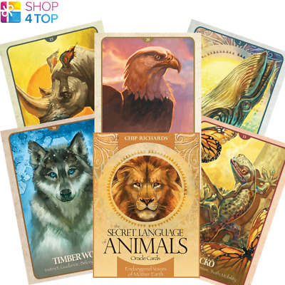 The Secret Language Of Animals Oracle Deck Cards Telling Blue Angel New