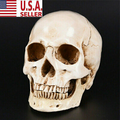 Realistic Retro Human Skull ReplicaModel Medical Art Teach Life Size 1:1 Resin