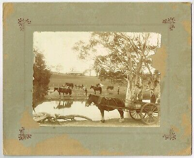 VINTAGE LARGE, BOARD MOUNTED REAL PHOTO OF FARM / HORSES / CARTS *A/F* 30x25cm