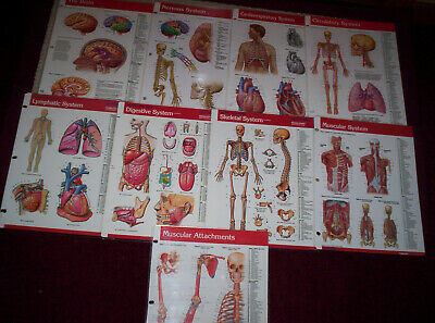 9 Anatomy Quick Reference Guides PAPERTECH  BRAIN--NERVOUS--SKELETAL SYSTEM--