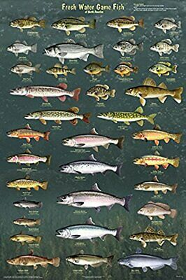 Fresh Water Game Fish of North America Laminated Educational Chart Poster 24x36