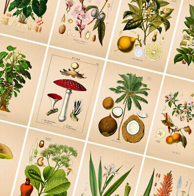 VINTAGE BOTANICAL CLASSIC POSTERS - A4 A3 A2 Prints - Wall Art Home Decor