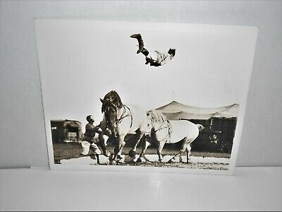 1940's-8x10 CIRCUS CARNIVAL Flying Over Horses Training Photo by Chester Photo