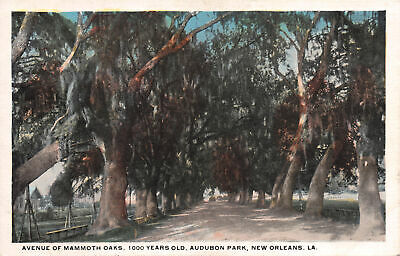 R272084 Avenue of Mammoth Oaks. 1000 Years Old Audubon Park. New Orleans. LA. Po