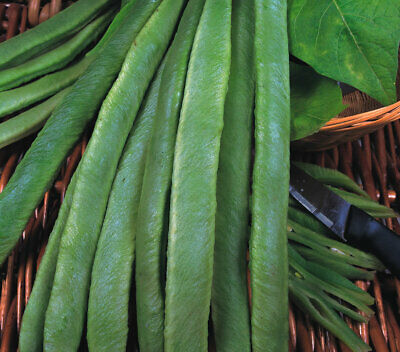 "Runner Bean Seeds - Many Varieties Available - Spring Planting ""Grow Your Own!"""