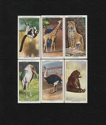 """s2229)     6  x  OGDEN'S  CIGARETTE TRADING CARDS FROM 1937  """"ZOO STUDIES"""""""