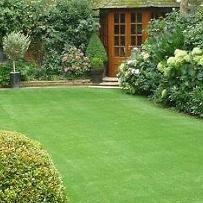 10kg Back Lawn Grass Seed - Top Selling All Purpose Mix, Hard Wearing