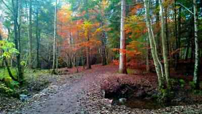11 Acres of Woodland for sale Inverness, Scotland