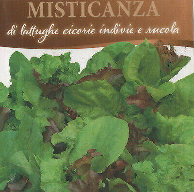 1000 semi DI MISTICANZA  DI LATTUGHE CICORIE ENDIVIE  RUCOLA- INSALATA- MIX