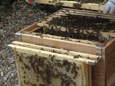 Bee keeping FRAME RESTS