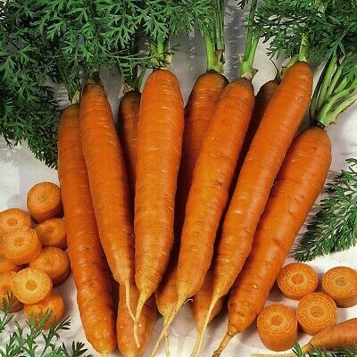 Many Varieties Available Carrot Seeds /'Grow Your Own/'