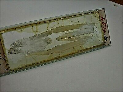 Antique Microscope Slide. Tooth of Ox.  From Joseph Needham Collection.