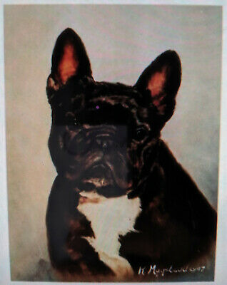 New Brindle French Bulldog Head Study 12 Note Cards & 12 Envelopes Ruth Maystead