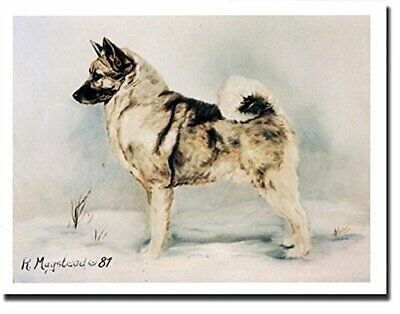 New Norwegian Elkhound Pet Dog Profile Notecards 12 Note Cards By Ruth Maystead