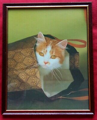 Ginger & White cat pricture Framed 27cm x 22cm