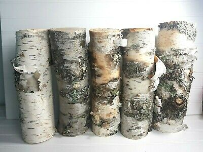 White Birch Logs 12 inches x Approximately 2 inch diameter 5 count