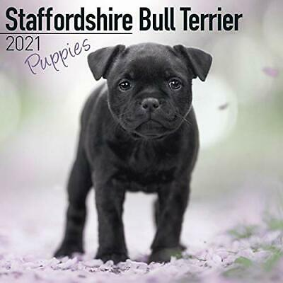 Staffordshire Bull Terrier Puppies 2021