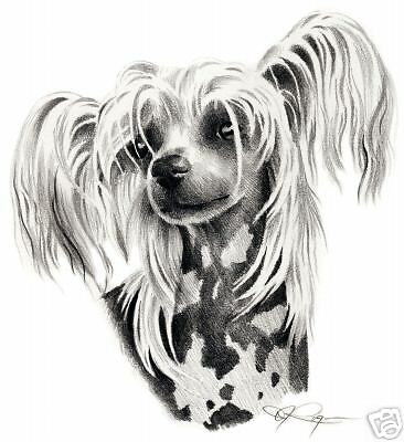 CHINESE CRESTED Dog Drawing ART 11 X 14 LARGE Print DJR