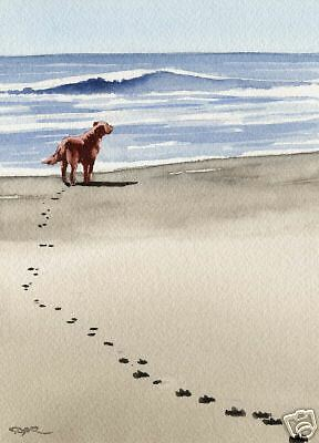 IRISH SETTER Beach Painting Dog ART 11 X 14 Signed DJR