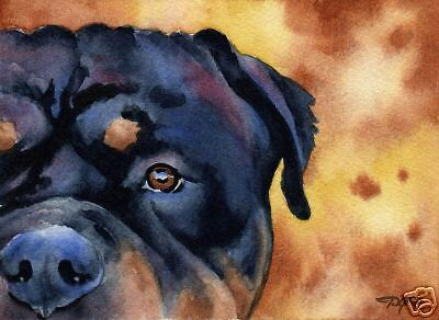 ROTTWEILER Watercolor Dog ART 11 X 14 LARGE Signed DJR