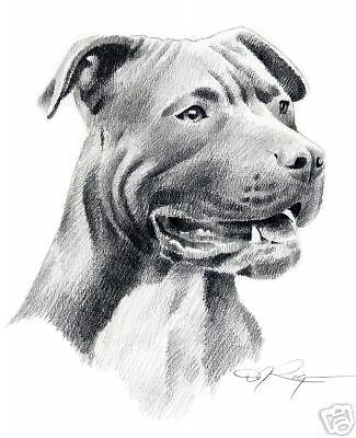 PIT BULL TERRIER Pencil ART 11 X 14 LARGE Signed DJR