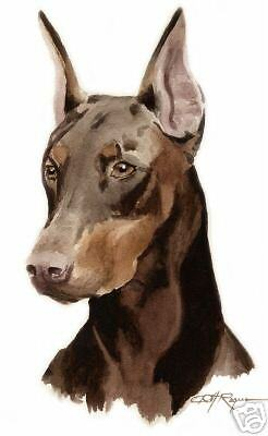 RED DOBERMAN PINSCHER Watercolor ART 11 X 14 LARGE DJR