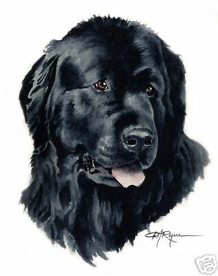 NEWFOUNDLAND Dog Painting ART 11 X 14 LARGE by Artist DJR