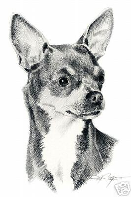 CHIHUAHUA Dog Drawing ART 11 x 14 LARGE Signed DJR