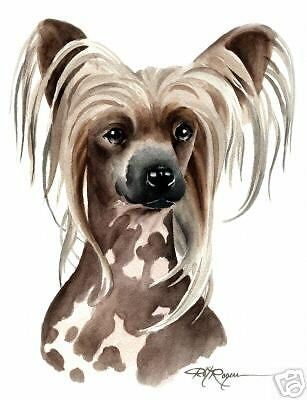 CHINESE CRESTED Dog ART 11 x 14 LARGE Print signed DJR
