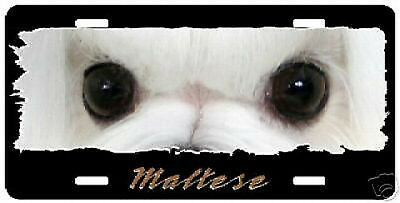 """Maltese  """" The Eyes Have It """" License Plate"""